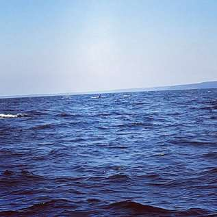 Orcas!