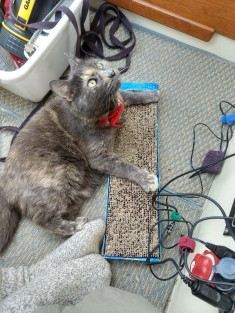 Momma Kitty playin' with her toys & scratcher.